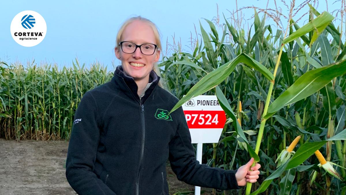 P7460, P7524, P7515, Reifeschätzung im Bestand Mais Garz